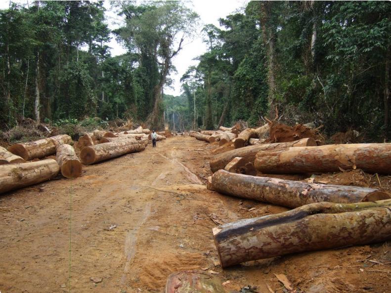 drc congo logging