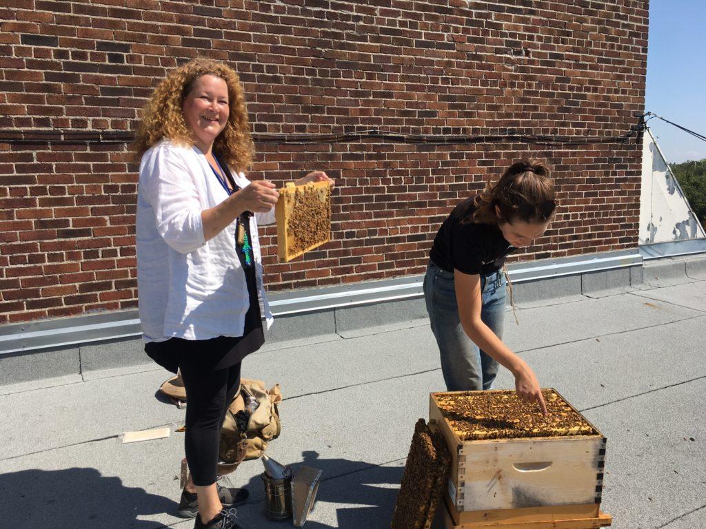 Honey Bee Oasis Garden — Over 1000 Votes