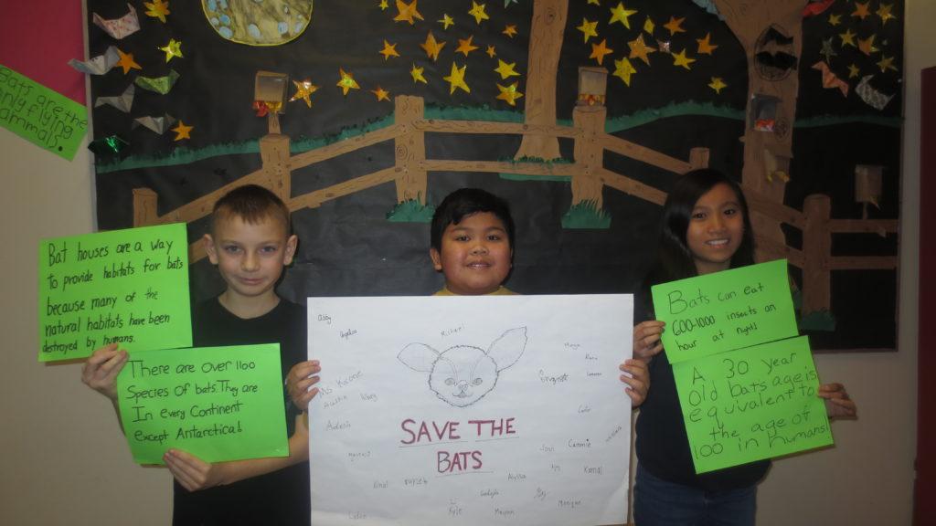 Brown Bat Habitats — Over 1000 Votes