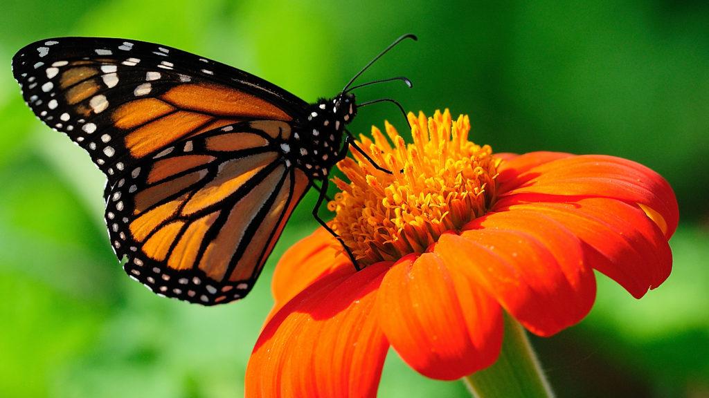 Butterfly/Native Wildflower Garden — Over 250 Votes