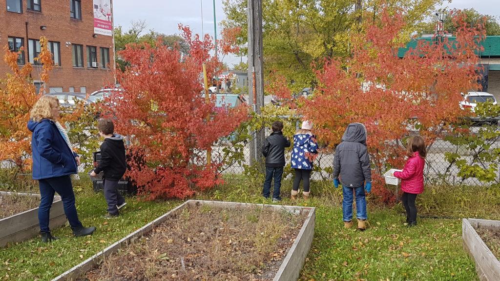 School Community Gardens — Over 1000 Votes