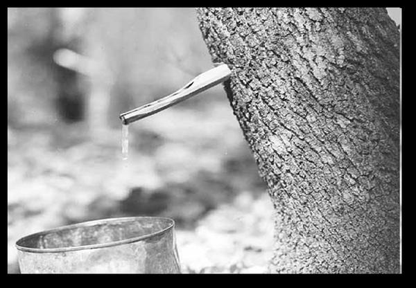 ziizibaakodokaan (sugar camp)