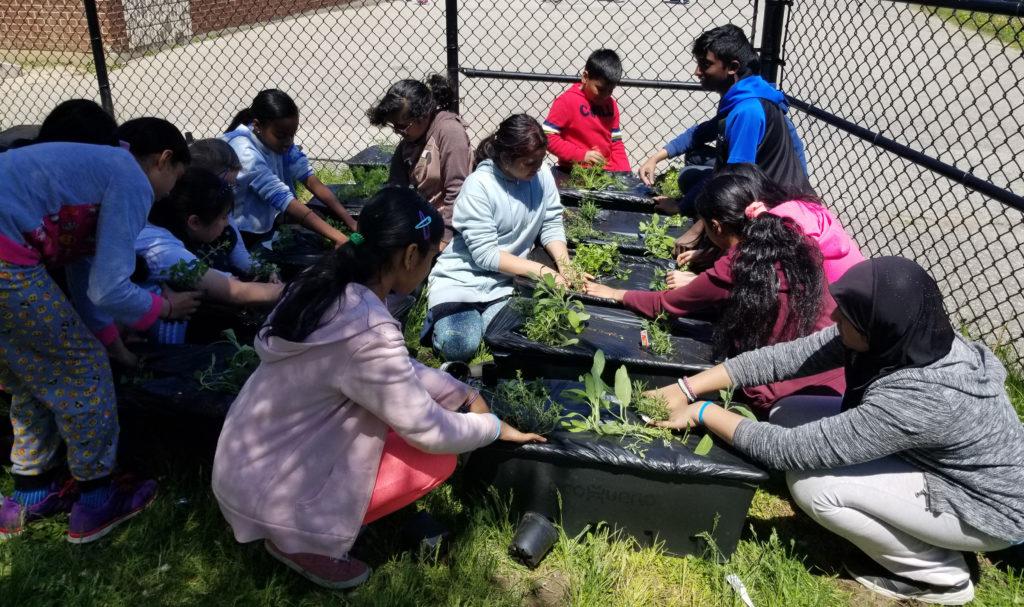Our Garden, Our Health